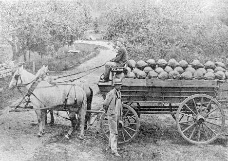 Horses pulling a tall wheeled cart of produce